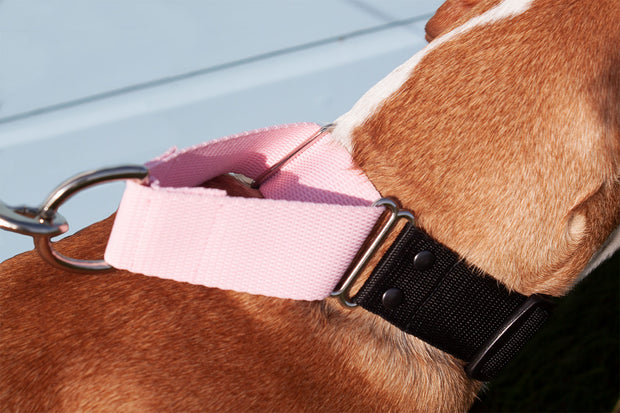 correctly fitted martingale collar on dog