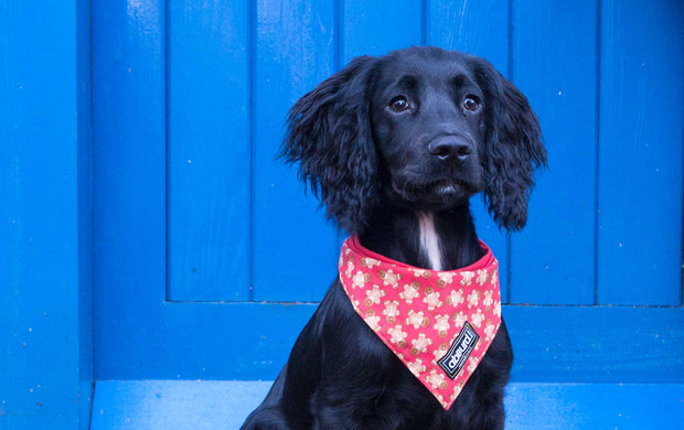 black dog wearing Happy Christmas cotton fabric bandana