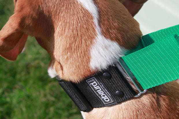 dog wearing correctly fitted martingale collar