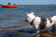 dog in sea wearing waterproof neoprene dog collar