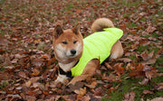 dog in autumn leaves wearing dog coat