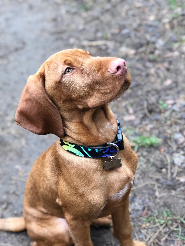 Neoprene Dog Collar: Haida Gwaii Rainbow