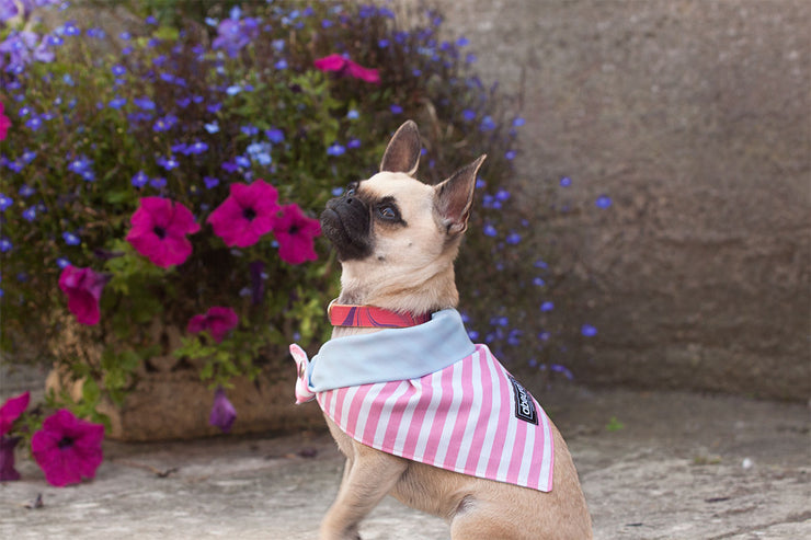 dog wearing I Scream cotton fabric dog bandana
