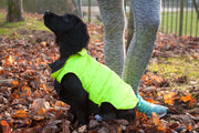 puppy wearing hi vis puffer dog coat