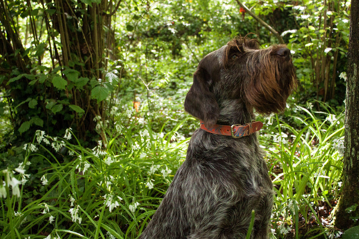 Britannia leather dog collar photoshoot forest