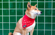dog wearing stylish red Absurd Design Snowflake bandana
