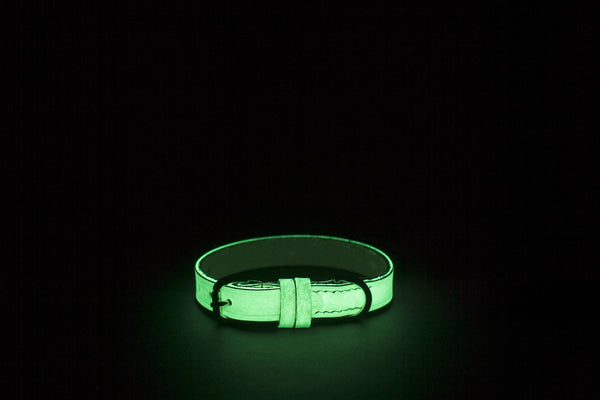 Glow in the dark non toxic dog collar