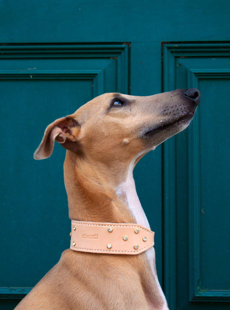 Shine Bright : Leather Sighthound Collar