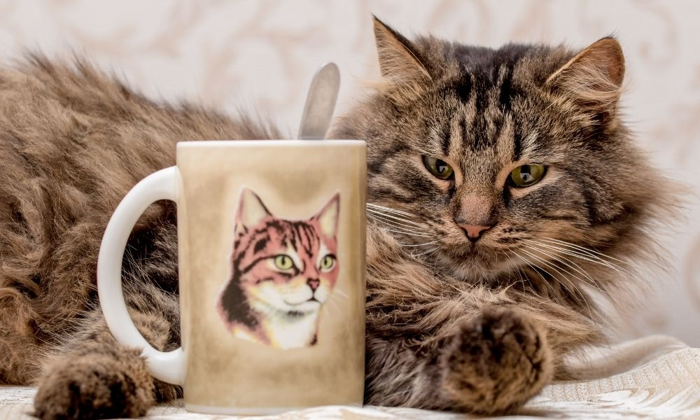Gifts Every Animal Lover Needs