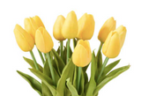 Mini Tulip Stems-Floral Spring-Yellow-Quinn's Mercantile