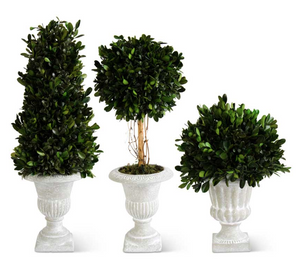 Boxwoods in Gray Wash Urns-Floral Spring-Quinn's Mercantile