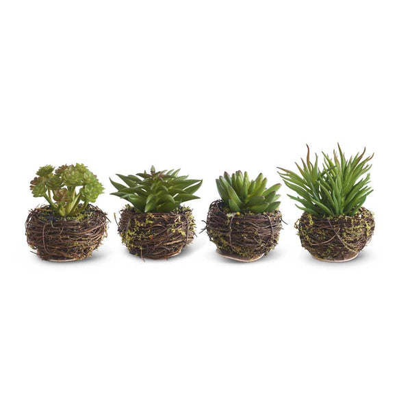 Succulents in Twig Pots-garden-Devil's Horns-Quinn's Mercantile