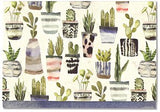 Boxed Note Cards-Home Office-Succulents-Quinn's Mercantile