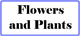 Flower and plant quilt patterns, florals