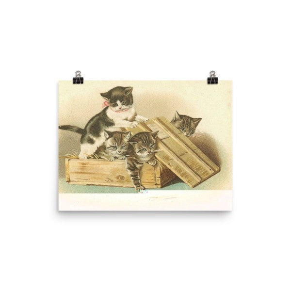 Cat box Poster - Hutsylife - 5