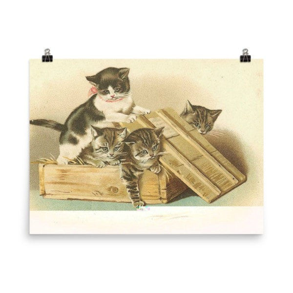 Cat box Poster - Hutsylife - 6
