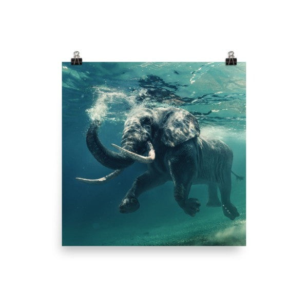 Swimming elephant color Poster