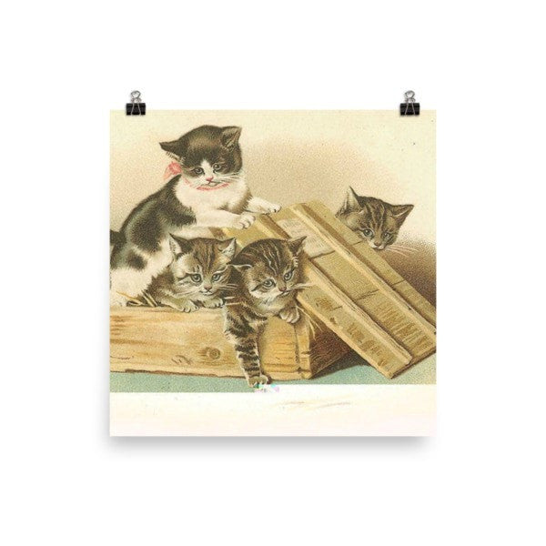 Cat box Poster - Hutsylife - 2