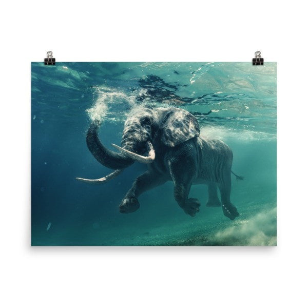 Swimming elephant color Poster - Hutsylife - 6
