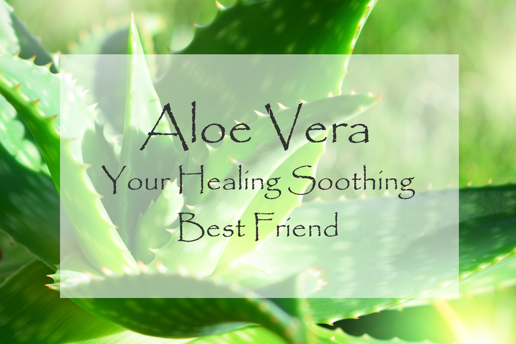 Aloe Vera - Your Healing Soothing Best Friend