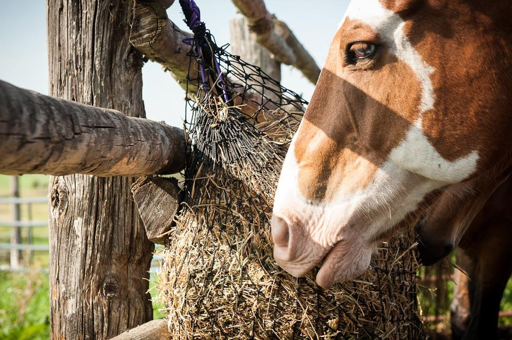 Eco Nets | EcoNets - Slow feed hay nets that Horses & Owners