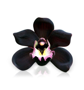 Black Orchid Soy Wax Melts