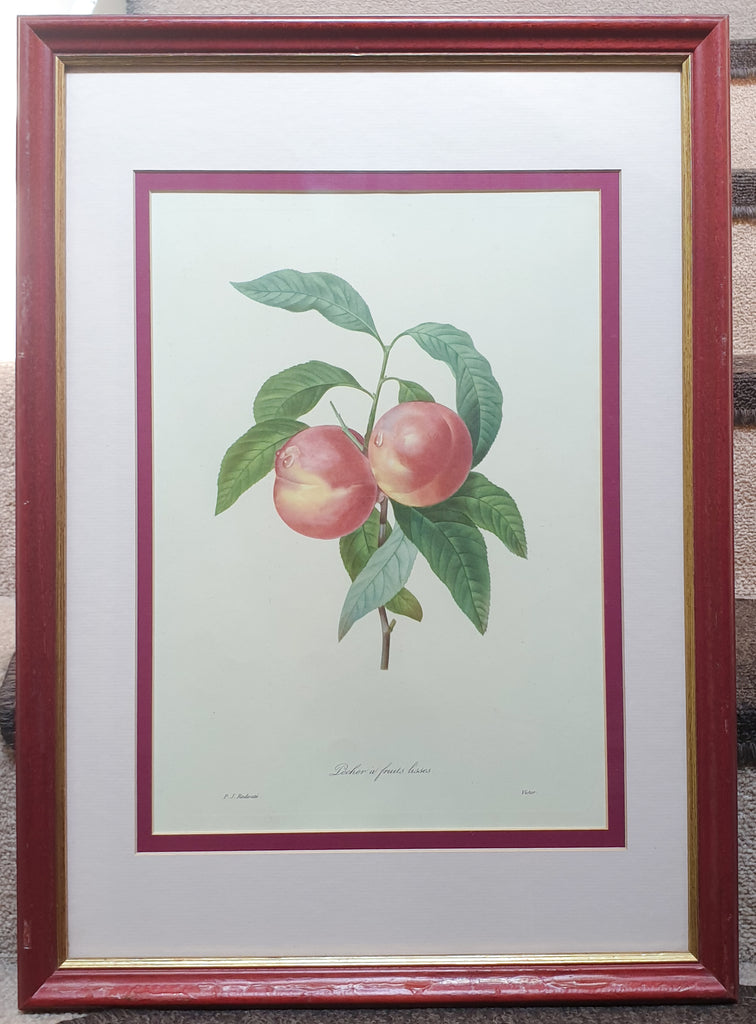 Botanical Print Peaches by Redoute
