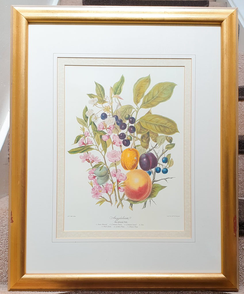 Large Botanical Print The Almond Tribe