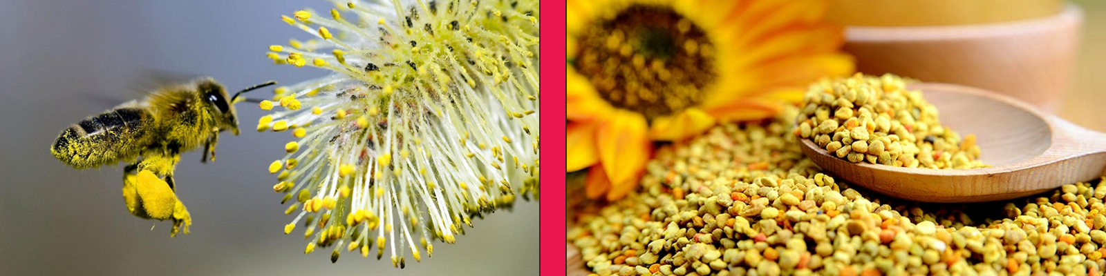 Benefits of Organic Bee Pollen