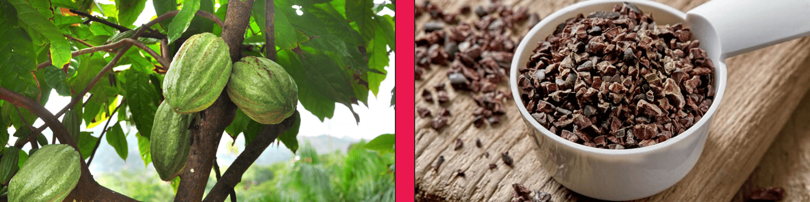 benefits of cacao powder and cocoa nibs
