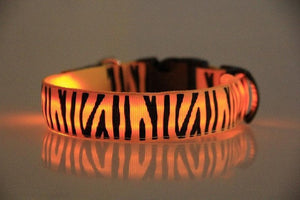Zebra Led Dog Collar - ensomart