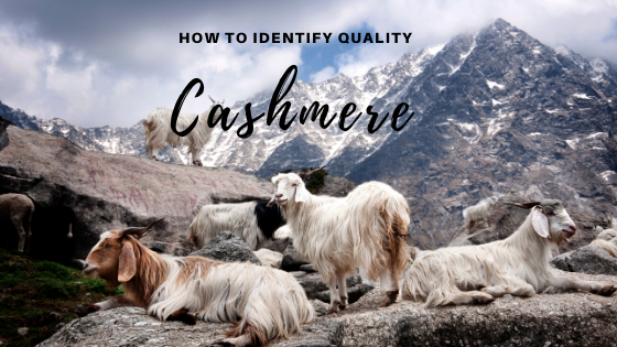 Understanding Cashmere + How to Identify Quality Cashmere