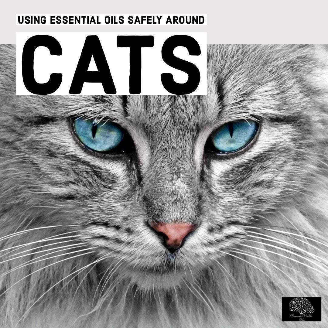 Using Essential Oils Safely Around Cats