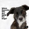 Which Essential Oils are Safe for Dogs?