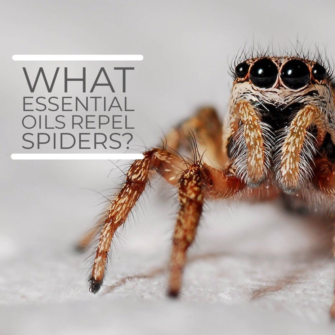 What Essential Oils Repel Spiders