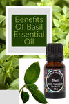 More than an Italian Spice – the Many Benefits of Basil Essential Oil