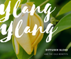Ylang Ylang Diffuser Blends and the Oil Benefits