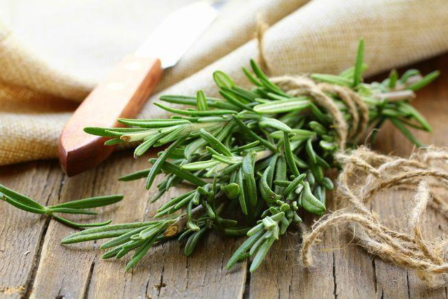 Aromatherapy Benefits - Wild Rosemary grows in the desert