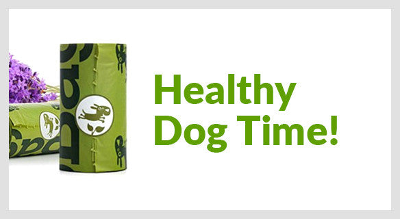 Healthy Dog Time!