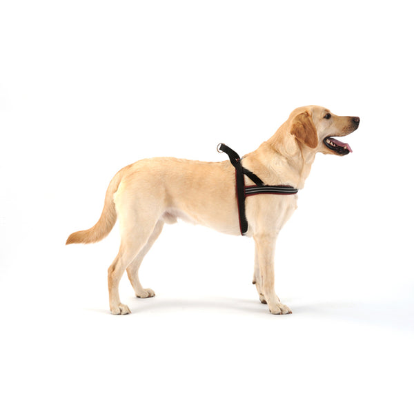 ComfortFlex Sport Harness - 11 colors