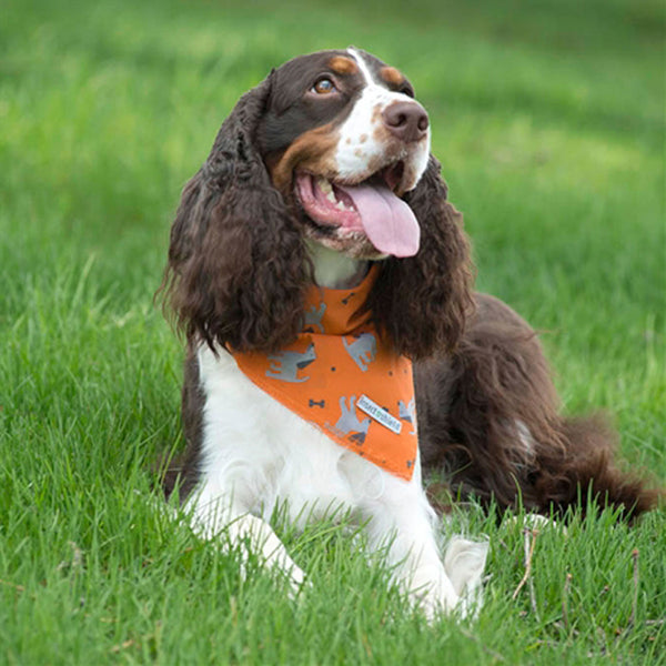 Insect Shield Bandanas<br>for Dogs & People - SALE!