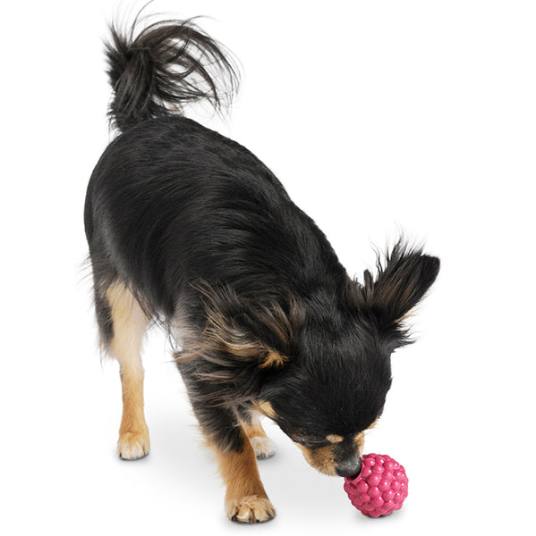 Orbee-Tuff Raspberry with Treat Spot