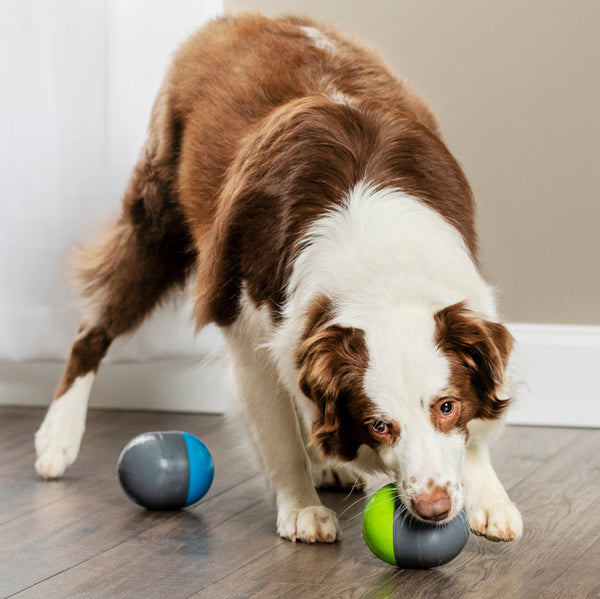 Ricochet Electronic Dog Toy