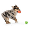 Rando Ball Toy for Dogs