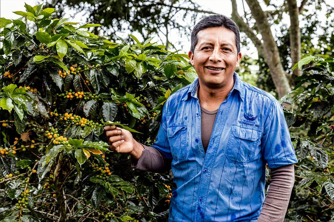 Specialty coffee green coffee sourcing with Caravela