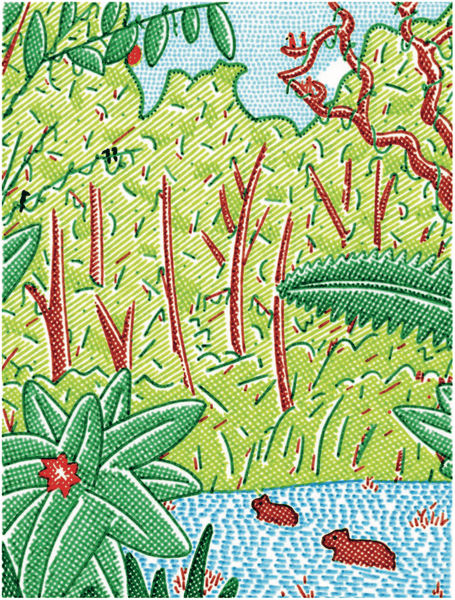 Drawing by Takashi Nakamura for an article in Standart about agroforestry in coffee