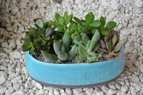 Gravelly substrate is the best kind of soil you can water your succulent effectively in