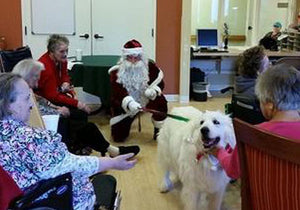 Sally The Rescue Dog And Santa Visit Hospitals & Nursing Homes