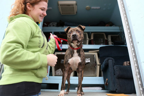 Dog Rescue in Michigan Welcomes Animals from Death Row