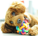 Puppy Squeaker Multi-Colored Chew Toy
